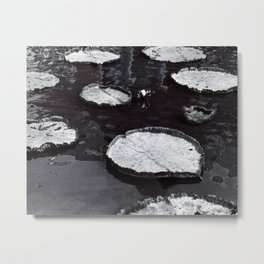 Black and White Large Lily Pads in Water Art Print Metal Print