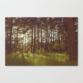 Summer Forest Sunlight - Nature Photography Canvas Print