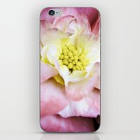 beth hoeckel iPhone & iPod Skins featuring Beth March - Pink Begonia by Regina Mountjoy