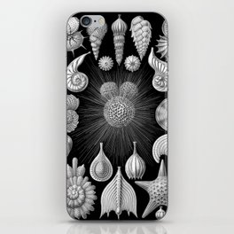 Sea Shells and Starfish (Thalamophora) by Ernst Haeckel iPhone Skin