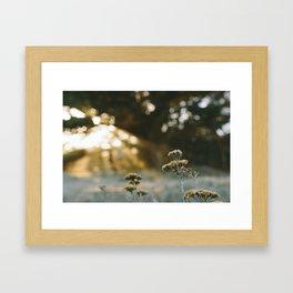 Faded. Framed Art Print