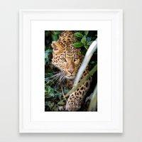 jaguar Framed Art Prints featuring JAGUAR by Ylenia Pizzetti