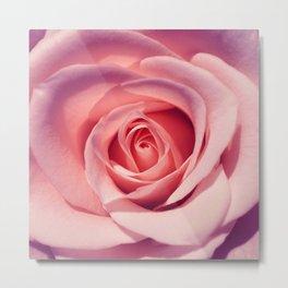 rose macro I Metal Print