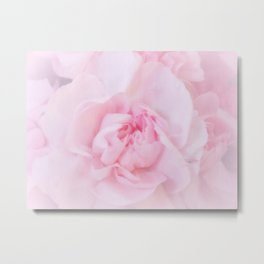 Soft Pink Carnation Metal Print