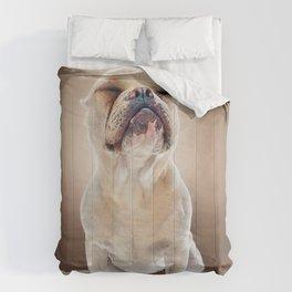 Super Pets Series 1 - Super Maya Comforters