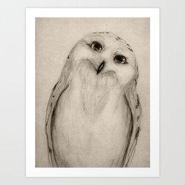 Snowy Owl Sketch Art Print