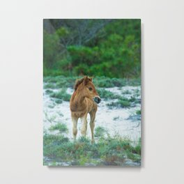 Assateague Foal Metal Print