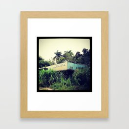 Live Alligators Framed Art Print