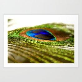 Shimmering Peacock Art Print