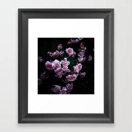rose in the dark 02 Framed Art Print