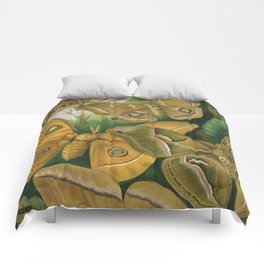 Moths & Caterpillars Comforters