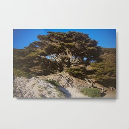 Ancient Wisdom, the California Monterey Cypress Tree Metal Print