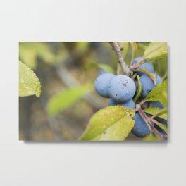 Blue fruits Metal Print