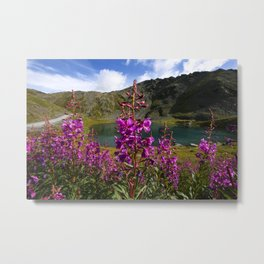 Fireweed - Hatcher Pass Alaska Metal Print