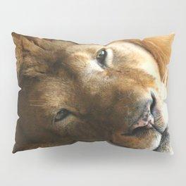 Lion Around Pillow Sham
