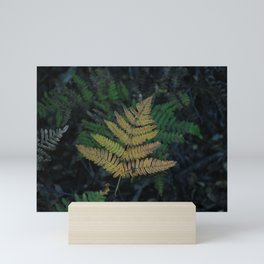 Moody Fern in Santa Cruz Forest Mini Art Print