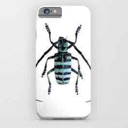 Anoplophora Graafi Beetle iPhone Case