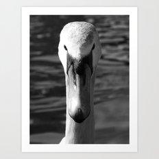 Swan Portrait 5 Art Print
