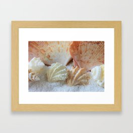 Seashells 2 Framed Art Print