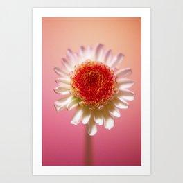Orange and Pink Flower Art Print