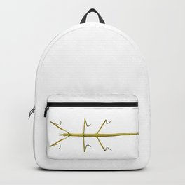 Spanish Walking Stick insect  species Leptynia hispanica Backpack