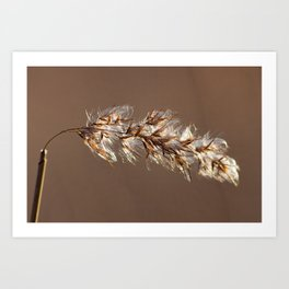 Phragmites Australis - Common Reed Art Print