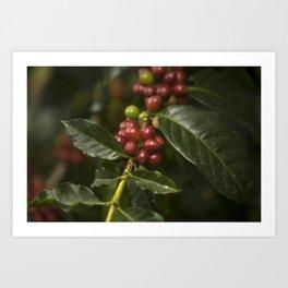 Coffee Seeds Art Print