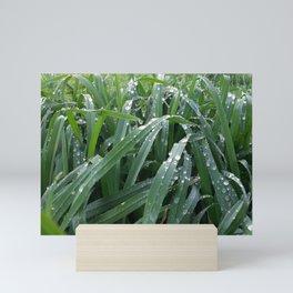 water drops on green grass Mini Art Print