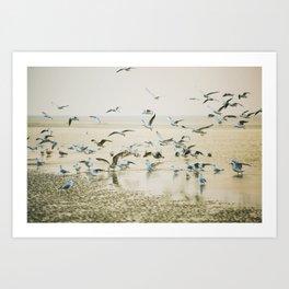 My heart beats in a million gulls Art Print