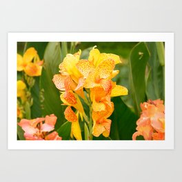 Freckle Face Yellow Canna Lily  Art Print