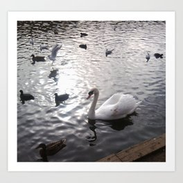 Swan 1 with other birds Art Print