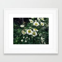pushing daisies Framed Art Prints featuring Pushing Daisies  by Little Krampus