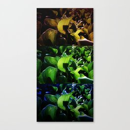 FRICTION BETWEEN THE CONTRAST Canvas Print