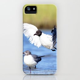 Watercolor Bird, Black-headed Gull 04, Janes Island, Maryland iPhone Case