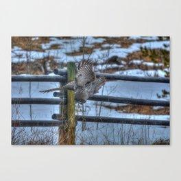 Dive, Dive, Dive! - Great Grey Owl Hunting Canvas Print