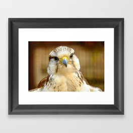 Gyrfalcon Falcon Closeup Framed Art Print