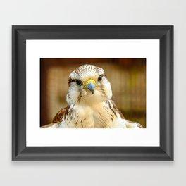 Gyrfalcon Falcon Closeup Framed Art Print