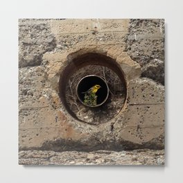 concrete with bird Metal Print