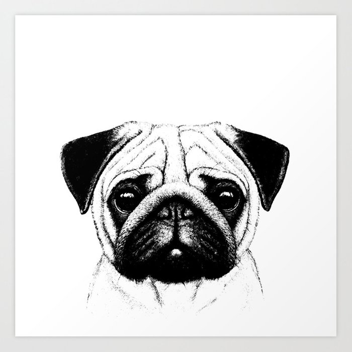 Black white pug pencil sketch art print