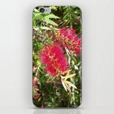Crimson Bottle Brush iPhone & iPod Skin