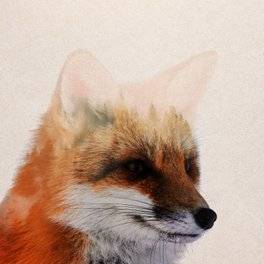 Backpack - Fox - Andreas Lie