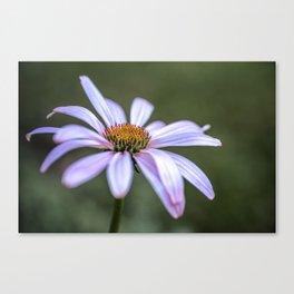 Echinacea flower up close Canvas Print