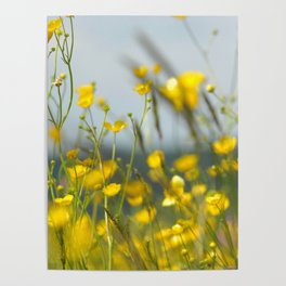 Yellow flowers 5 Poster