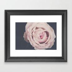 french rose Framed Art Print