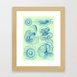 Ernst Haeckel's Leptomedusae Framed Art Print