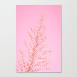 Seeds of Weeds in Pink Canvas Print