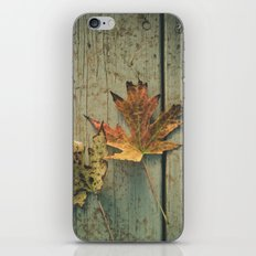 Fallen Ones, Two Autumn Leaves on Rustic Blue Porch Boards iPhone & iPod Skin