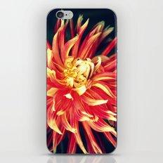 Sunburst iPhone & iPod Skin