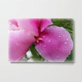 stray petal in the rain Metal Print