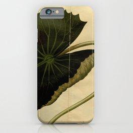 Flower castalia magnifica 2 iPhone Case